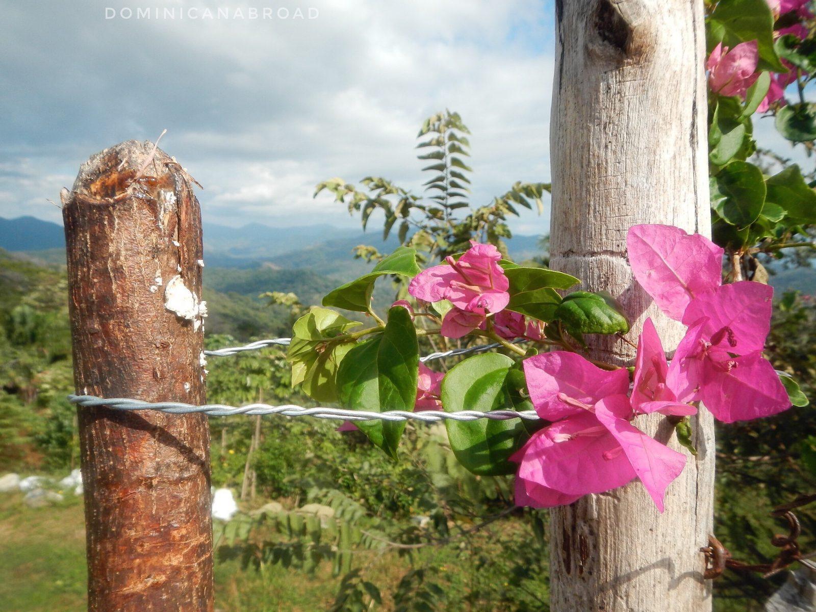 Playa Carillo Costa Rica